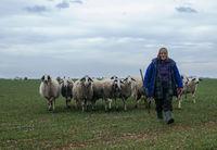 овчарката; comments:5