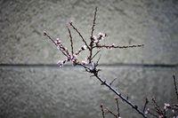 пролетно настроение; comments:1