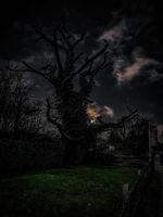 Онова дърво, отново; comments:3