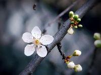 Пролетно... :); comments:18