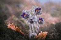 Желание за пролет; comments:28