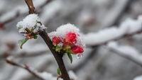Замръзнала пролет; comments:6