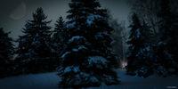 Нощ в гората.; No comments