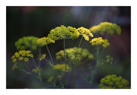 no name ( ID=2350161 ); comments:2