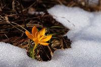 Пролет, живот, свобода, красота,......... !; comments:28