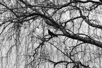 Самотната птица; comments:4