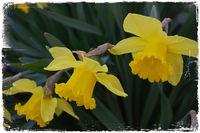 Цветята в моята градина; comments:9