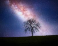 Дървото; comments:5