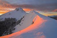 ,,Цветовете на зимата''; comments:41