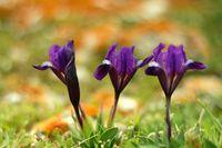 Пролет; comments:12