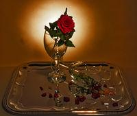 Стъкла и цветя; comments:5