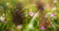 Пролетно ухание; comments:5