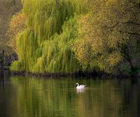 Пролетна Гледка; comments:5
