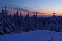 Мразовито утро; comments:5