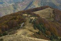 Есенна палитра; comments:1