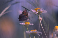 no name ( ID=2352543 ); comments:25