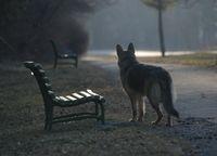 Пейка и куче; Няма коментари