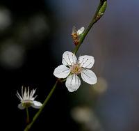 Пролет, пролет, пролет........; comments:3