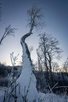 Дървото; comments:1