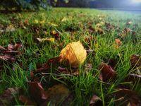 По-тихо от тревата...; comments:1