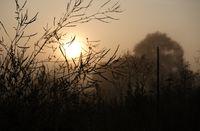 Мъгливо утро в Банско; comments:1