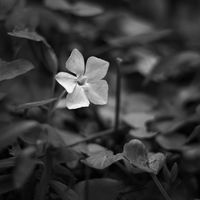 Пролетна импресия; comments:1