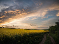 Rapeseed sunrise; comments:4
