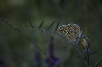 Красотата на една пеперуда; Коментари:1