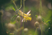 no name ( ID=2360203 ); comments:3