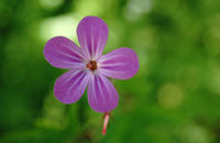 no name ( ID=2362664 ); comments:5