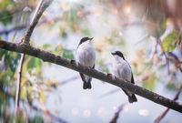 Birds Talk; comments:5