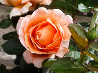 no name ( ID=2363976 ); comments:7