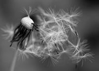 Обичащите вятъра; Коментари:6