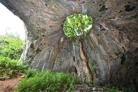 Пещерата с дървото; comments:2