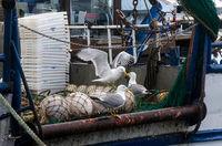 Риболовен кораб; No comments