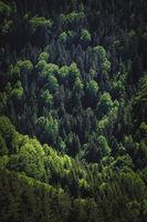 50 нюанса зелено; No comments