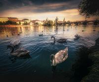 Изглед към Карлов мост в Прага; comments:4