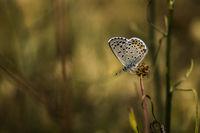 Пеперудомодел; Коментари:4