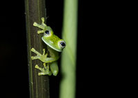 Cute frog 1; comments:13