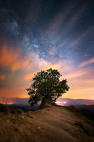 Дървото; comments:4