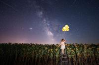 Феята на слънчогледите 2; comments:6