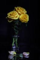Рози; comments:2
