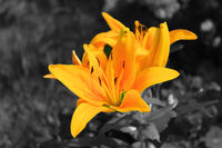 no name ( ID=2366301 ); comments:5