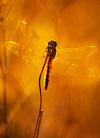 no name ( ID=2366667 ); comments:6