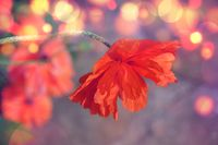 no name ( ID=2366826 ); comments:2