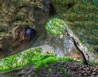 Борбата за живот и слънце в природата често ражда неочаквана красота.; comments:2