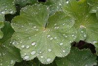 Дъждовно утро; comments:2