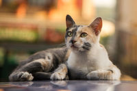 Cat on a Hot Tin Roof; comments:6