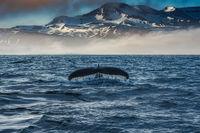 Среща с един от най - големите бозайници на планетата; comments:8