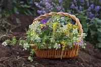 Горски цветя; comments:5